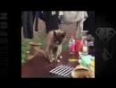 Смешные Кошки ДО СЛЁЗ Коты Приколы с Котами 2017