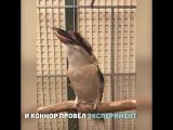 Птица смеётся как злодей из Фильма Ужасов! Видео прикол