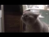 Кот очень смешно говорит_ открой дверь!