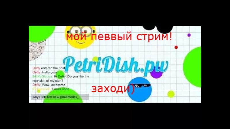 стрим по игре Petri Dish
