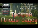 Shadow of the Colossus (В тени колосса) Трофей [PS4] Плоды садов