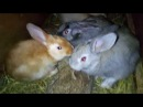 Кроличьи дела
