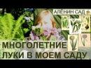 5 видов лука в моем саду Вкусные и красивые многолетние луки Как размножать лук