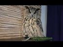 Просто сова сидит на жопке и говорит угу