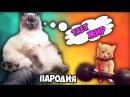 Пародия! Смешные котики - Тает жир!
