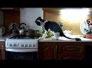 Коты воришки!Лучшая нарезка приколов про котов!Хохма.