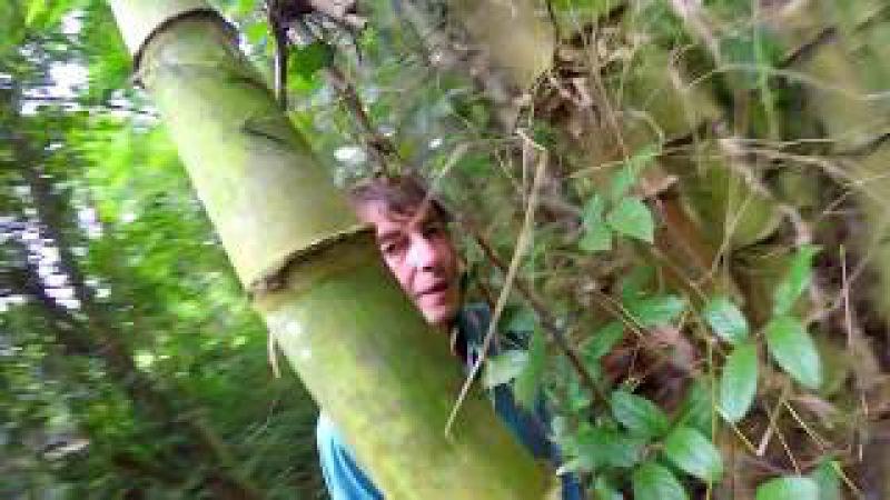 По бамбуковым зарослям Вьетнамских партизан