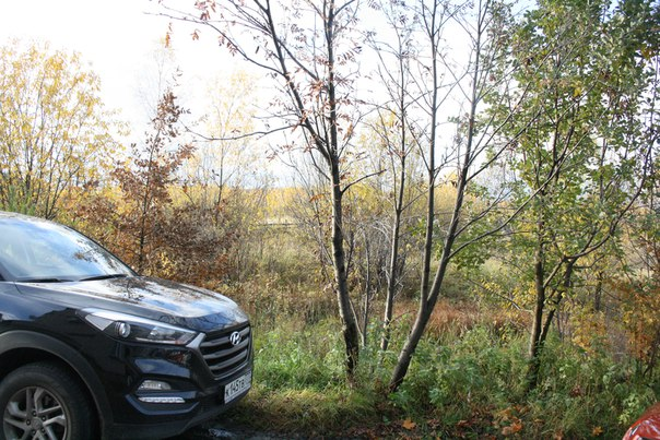 Вид на заросшее болото перед стройками в Черёмушках. Ранее тут не было деревьев и болото не заросло, по нему мы ходили вброд.  14 ноября 2017