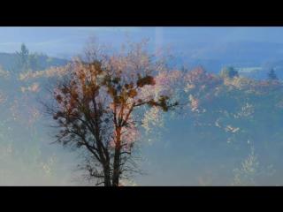 Frédéric Chopin - Nocturne in E flat Major Op. 9 No 2 / Фредерик Шопен - Ноктюрн ми-бемоль мажор, Op.9 №2