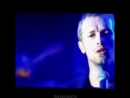 Coldplay Turtle