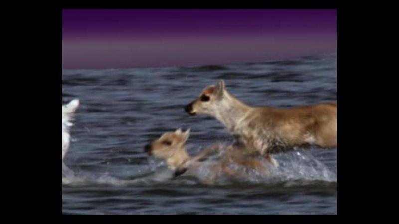 Как олень жаждет к водам тихим