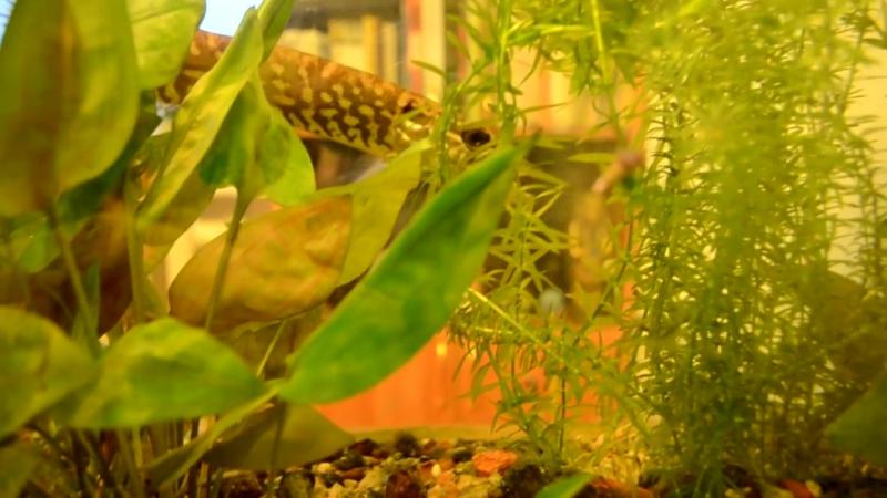 Как вырастить щуку-монстра в аквариуме за 9 месяцев