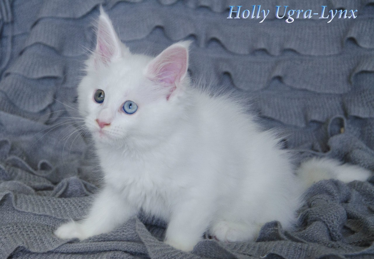 "<span style=""font-weight: bold;"">Holly Ugra-Lynx</span><br>"