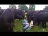Весёлая жизнь на ферме
