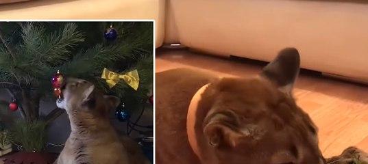Пензенский кот зарабатывает деньги в сети 7b3653cd5b3