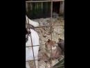 Наоми и щенки