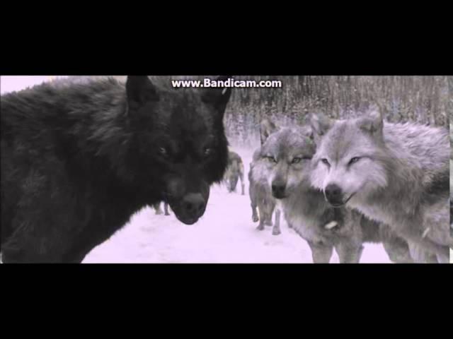 Twilight Werewolves My demons(Starset)