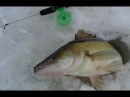 ТРОФЕЙНЫЙ СУДАК НЕ ПРОЛАЗИТ В 150 ЛУНКУ Зимняя рыбалка ловля судака зимой на блесну балансир вибы