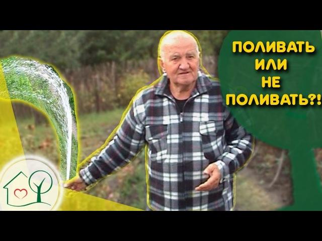 Бублик Б.А. Поливать 🌊 или не поливать ☂ растения на огороде. Огород без хлопот