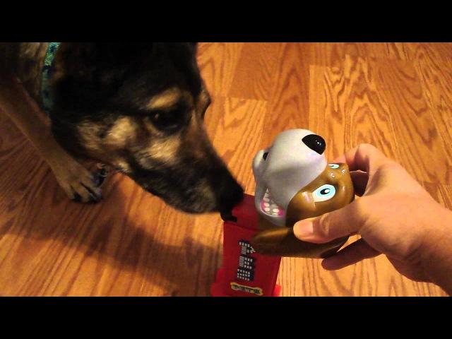 Pez Dispenser Dog