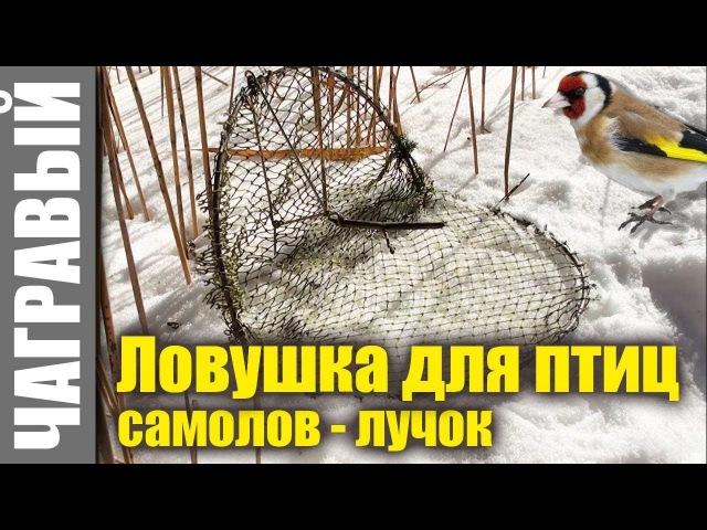 Ловушка для птиц - простой самолов - лучок