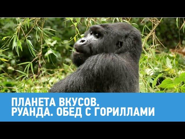 Руанда. Обед с гориллами 🍳 Планета вкусов 🌏 Моя Планета