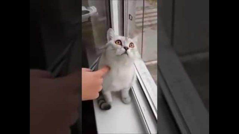 папич кот DOTA 2 АРТАС