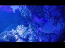 Крокус Сити Океанариум 2 часть