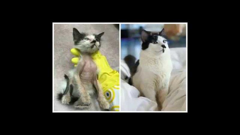 От неё отказались в приюте и службе спасения но любящие сердца не дали усыпить эту кошку