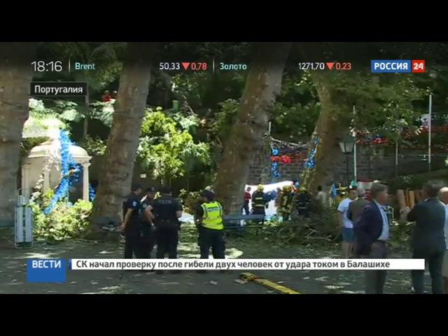 Новости на «Россия 24» • Упавшее дерево убило 11 человек в Португалии