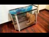 Котенок и аквариум