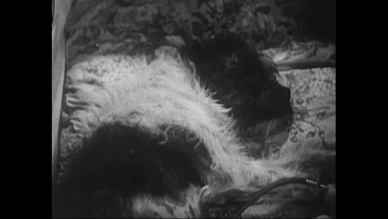 Капитан Америка (1944): 1 сезон 10 серия — Корпус карателя (Субтитры)
