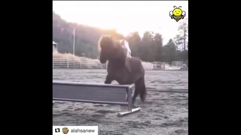 Идеальная пара наездник лошадь)