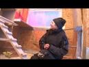 Разведение цесарок в домашних условиях подробно видео
