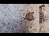 Детёныш летучей мыши заполз во двор - 21.06.17 - Это Ростов-на-Дону!