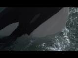 Освободите Вилли 3_ Спасение _ Free Willy 3 (1997) BDRip 720p [vk.com_Kinoru]