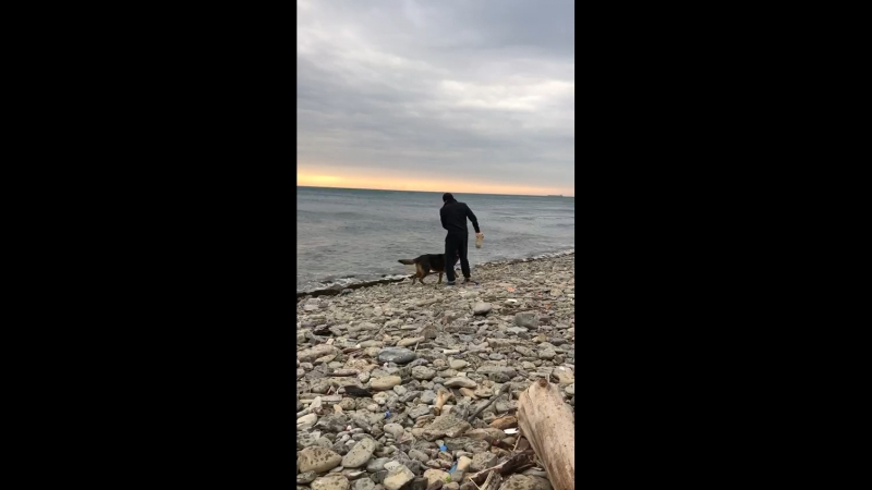 Мухтар у моря на прогулке. Февраль 2018