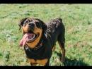 1 счастливый день из жизни собаки