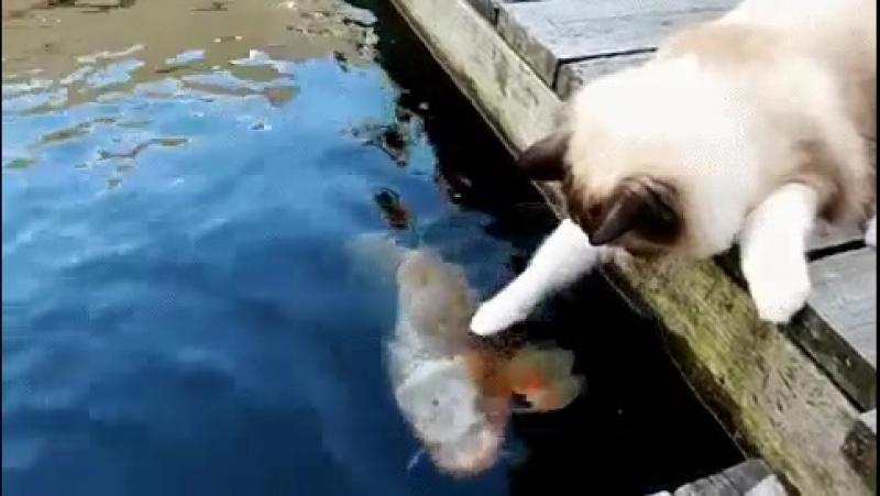 Привет,дружок!