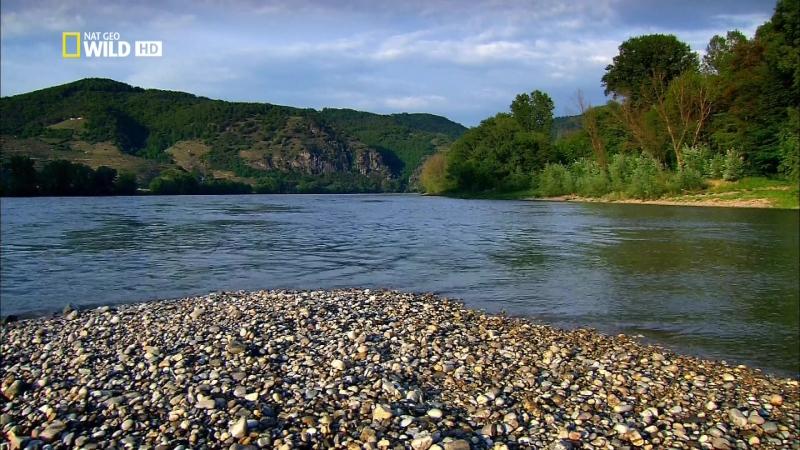 Дунай: Европейская Амазонка (2012)