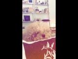 chloe bennet: instagram