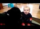 Собаки играют с детьми 6 прикол домашние питомцы смешное видео для настроения