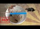Крыса Ловушку Самодельных В Камбодже Удивительный Поймать Крыса Ловушки Воды
