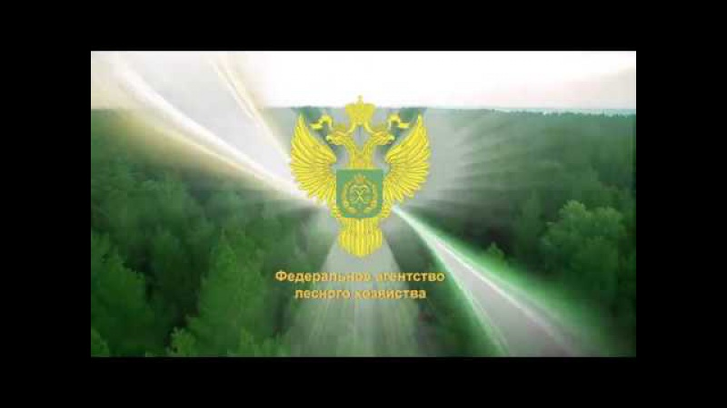 Лес - национальное достояние!