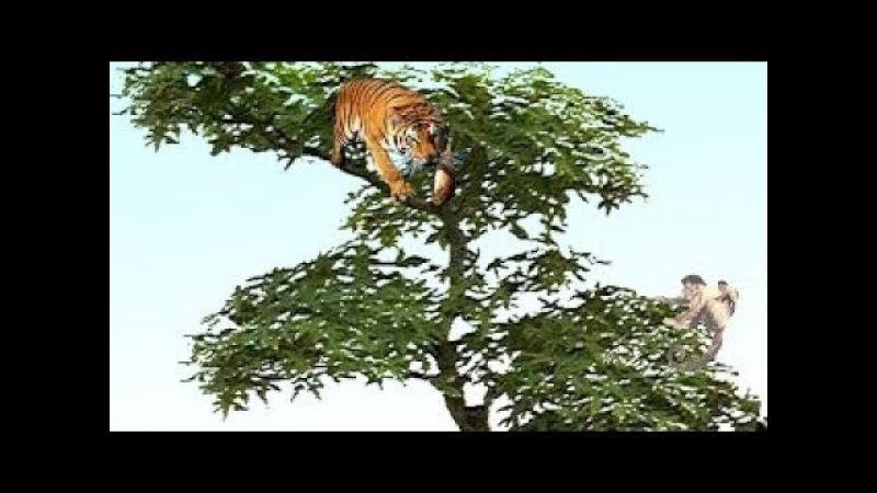 Kinh Ngạc Vua khỉ đại chiến báo đốm Chúa sơn Lâm hươu cao cổ tự vệ khị bị 12 sư tử đánh hội đồng