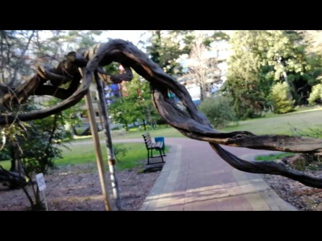 Сочи, Адлерский район. Дендрарий (Грот любви, мать и дитя, огромное дерево и самолеты в небе)