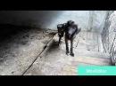 5 Hunde aus der Tötung von PRACA Sarajevo gerettet STRAY DOG BOSNIA SAVED FROM PRACA SHELTER