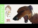 Чем опасен корм холистик для вашего питомца?! Советы ветеринара.