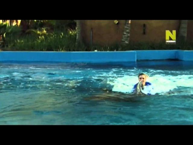 Дельфины. Тест на интеллект