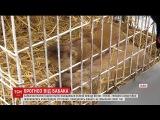 У Львов бабаки зробили свй прогноз на прихд тепла в Украну